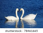 a couple of swans symbolizing... | Shutterstock . vector #78461665