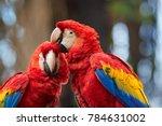 close up ara macao  scarlet...   Shutterstock . vector #784631002