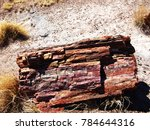 A Petrified Log In The...