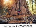 hugging giant sequoia redwood... | Shutterstock . vector #784650022