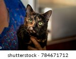 Black And Red Cat With A...