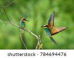 european bee eater  a small...   Shutterstock . vector #784694476