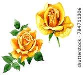 wildflower rose flower in a...   Shutterstock . vector #784711306