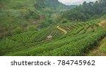 workers in the green field of... | Shutterstock . vector #784745962