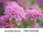 soft focus pink flower with... | Shutterstock . vector #784764208