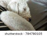 A Dog   Bedlington Terrier   I...