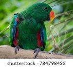 eclectus green parrot | Shutterstock . vector #784798432