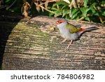 red browed eye  birdwatching ...   Shutterstock . vector #784806982