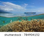 over and under sea surface in... | Shutterstock . vector #784904152