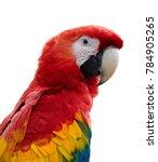 isolated on white  vertical... | Shutterstock . vector #784905265