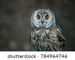 the short eared owl is a... | Shutterstock . vector #784964746