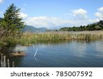 bourget lake and reeds bed in... | Shutterstock . vector #785007592