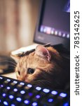 Stock photo ginger cat near the computer keyboard closeup 785142625