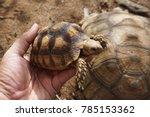 baby tortoise on the hands of... | Shutterstock . vector #785153362