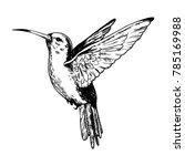 humming bird animal engraving... | Shutterstock .eps vector #785169988