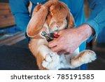 rabbit breeder trimming nails... | Shutterstock . vector #785191585