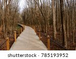 Pathway Through The Woods.  A...