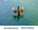 The Duck In The Water  Wings...