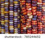 Multi Colored Flint Corn Close...