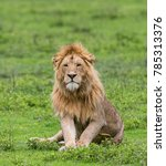 big male lion lying in the... | Shutterstock . vector #785313376