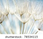 blue abstract dandelion flower... | Shutterstock . vector #78534115