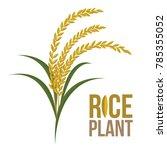 rice plant on white background  ... | Shutterstock .eps vector #785355052