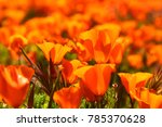 california poppies during super ... | Shutterstock . vector #785370628