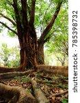 the abundance of trees.nature | Shutterstock . vector #785398732