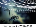 Abstract And Magical Image Of...