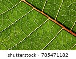 natural vivid green leaf macro... | Shutterstock . vector #785471182
