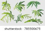 tamarind leaves isolated on... | Shutterstock . vector #785500675