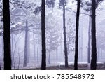 a view from the winter season | Shutterstock . vector #785548972