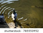 dove on the river | Shutterstock . vector #785553952
