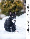 Black Cat On The Snow.