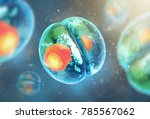 cell embryo  mitosis under... | Shutterstock . vector #785567062