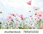 cosmos pink flowers background | Shutterstock . vector #785651032