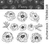 collection peony with line art...   Shutterstock .eps vector #785686168