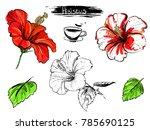 hand drawn illustration set of... | Shutterstock .eps vector #785690125