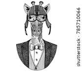camelopard  giraffe animal... | Shutterstock . vector #785710066