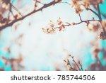 Flowering Trees In The Spring....