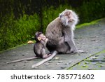 mother and baby balinese long... | Shutterstock . vector #785771602