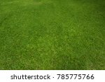 green grass background and... | Shutterstock . vector #785775766