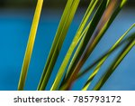 Reeds Detail With Blue Water...