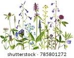 watercolor drawing wild plants... | Shutterstock . vector #785801272