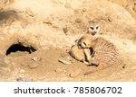 two meerkats in sunny day | Shutterstock . vector #785806702