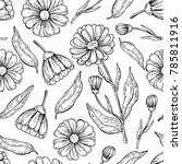 calendula seamless pattern. ... | Shutterstock .eps vector #785811916