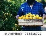 farmer orange lady the... | Shutterstock . vector #785816722
