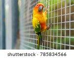 beautiful colorful sun conure... | Shutterstock . vector #785834566