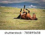 Brown Horse In Dartmoor...