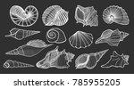set of various beautiful... | Shutterstock .eps vector #785955205